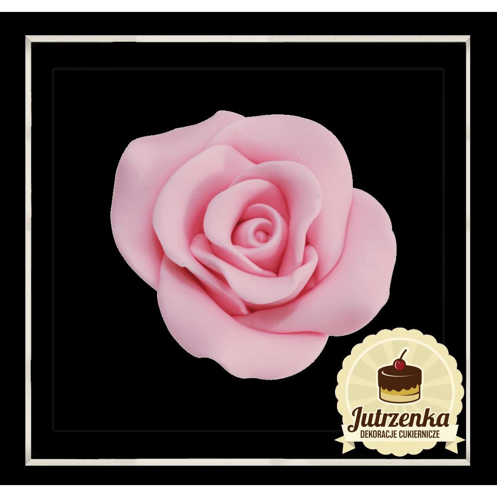 cukrowa róża kolor róż