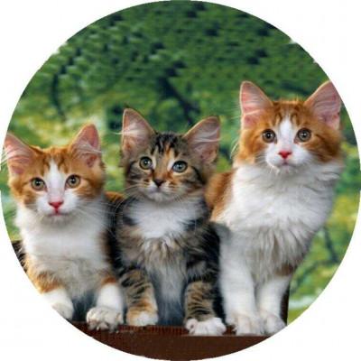 milusie_trzy_kotki