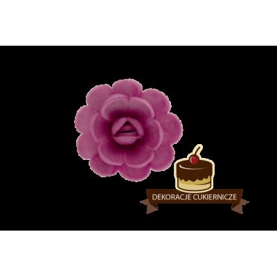 Róże angielskie 6 szt.
